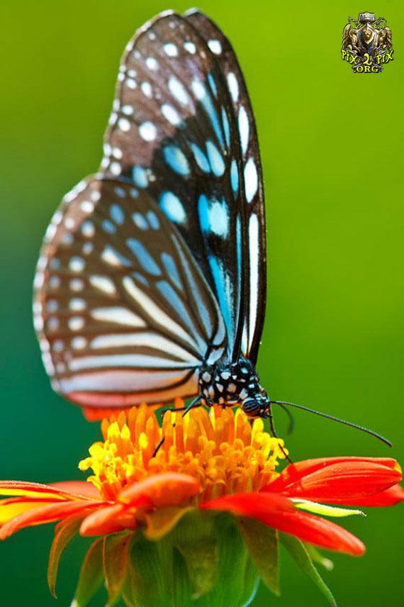 ***پروانه ها زيبايي خلقت خداوند ***