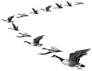 *****نقش پرندگان شكاري در طبيعت*****