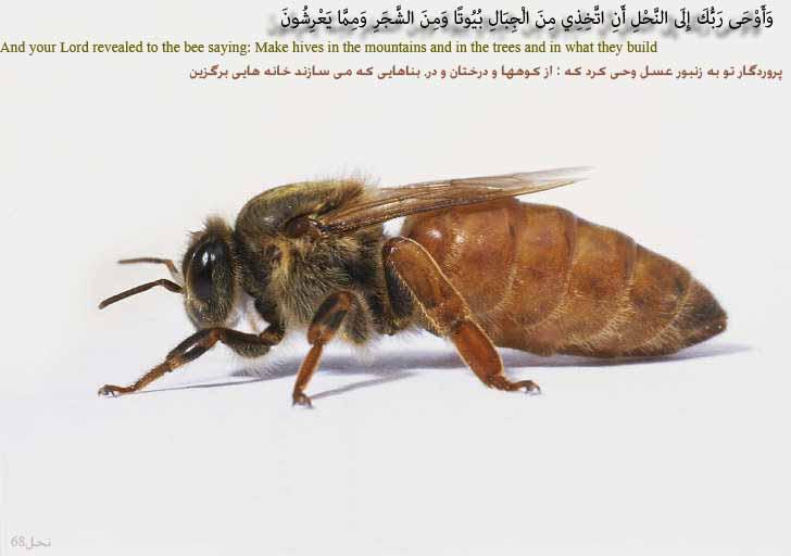تصاویرگرافیکی برمبنای قرآن و نهج البلاغه