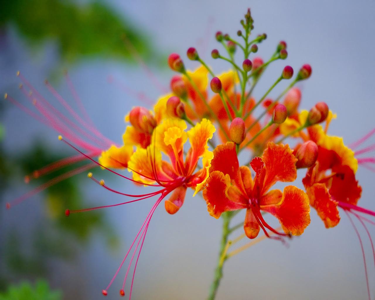 عکس گل نارنجی