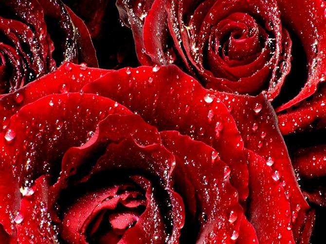 День тюльпанов открытки