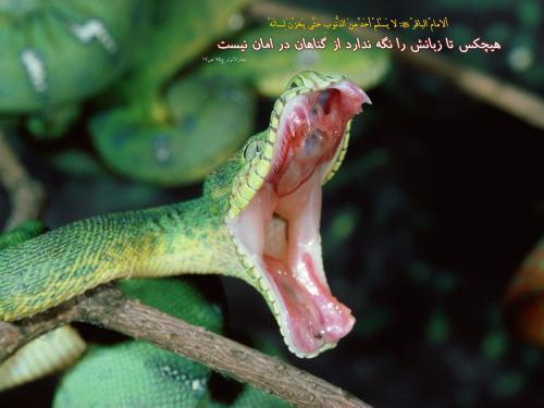 فحش، دشنام گويي و بددهاني از منظر قرآن و روايات